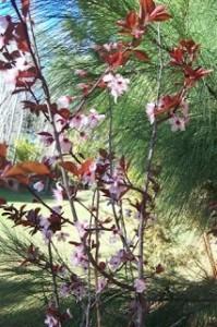 Primavera en Costa del Este