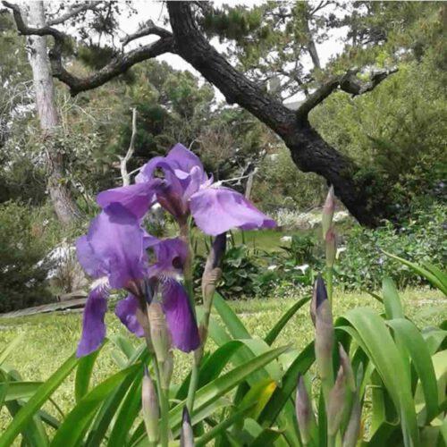 Portal de LA Costa Primavera en Costa del Este La Costa