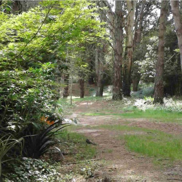 Bosque en Costa del Este La Costa