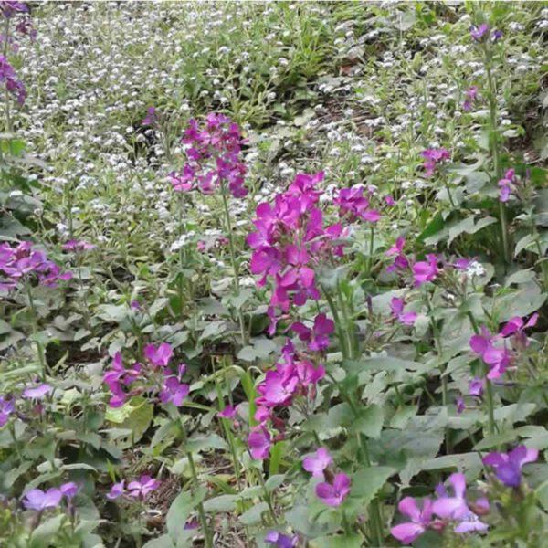 Primavera en Costa del Este La Costa
