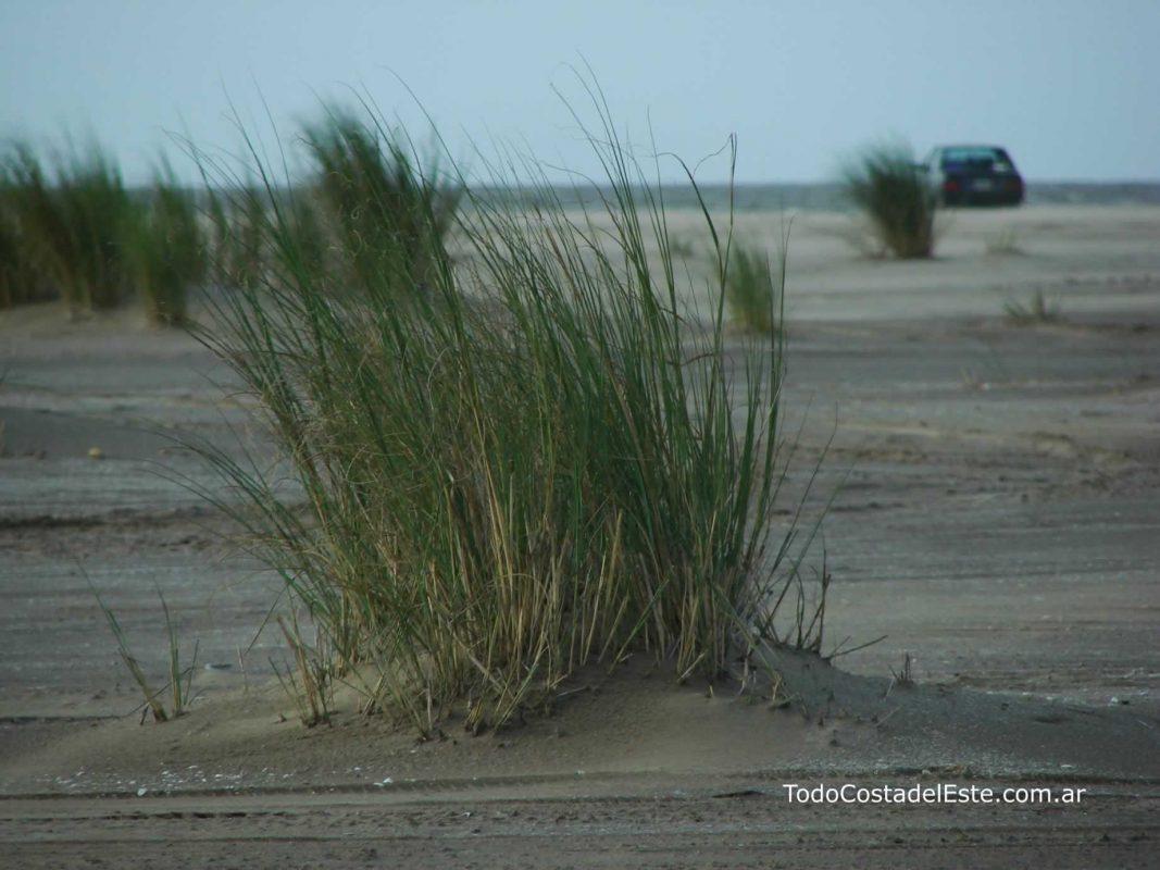 Punta medanos playa