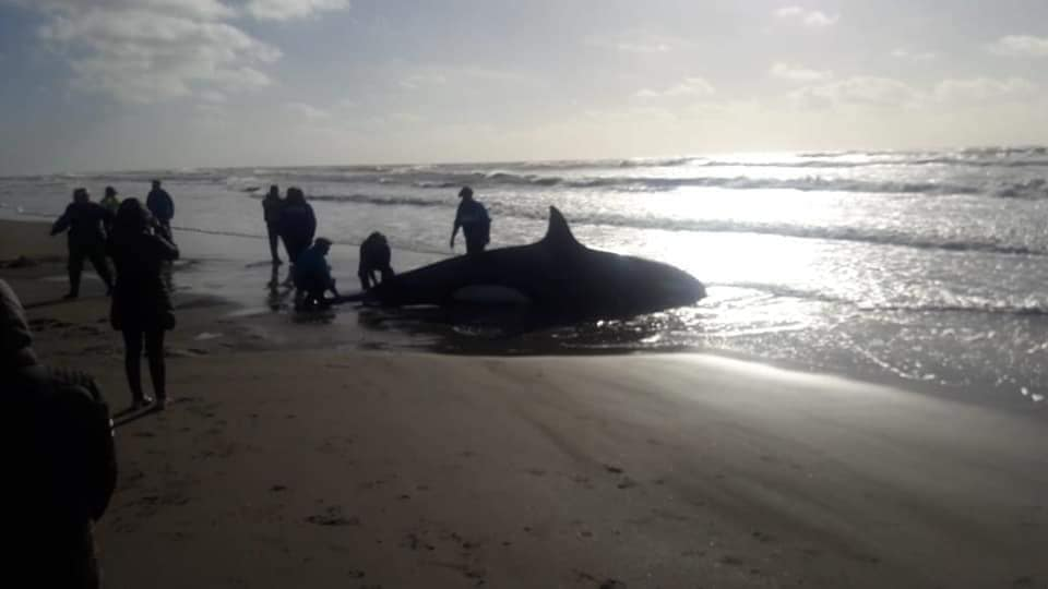 orca en la playa