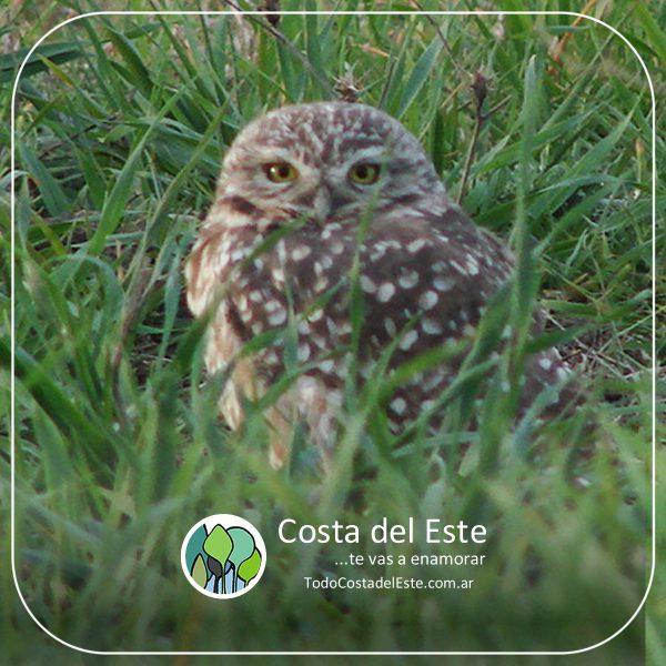 z 2020 fotos12 Costa del Este natural II