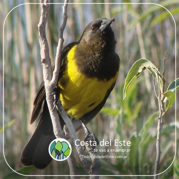z 2020 fotos14 Costa del Este natural II