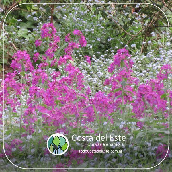 z 2020 fotos5 Costa del Este natural II