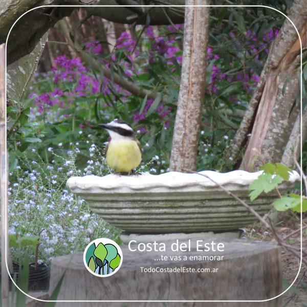 z 2020 fotos6 Costa del Este natural II