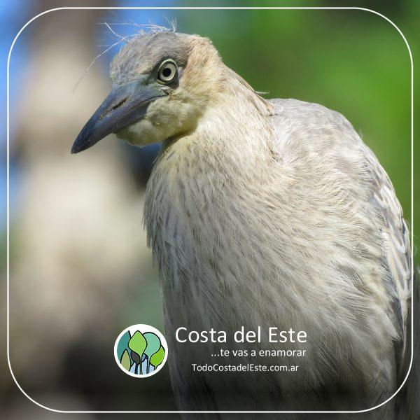 z 2020 fotos9 Costa del Este natural II