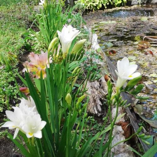 Consejos de jardinería Setiembre La Costa
