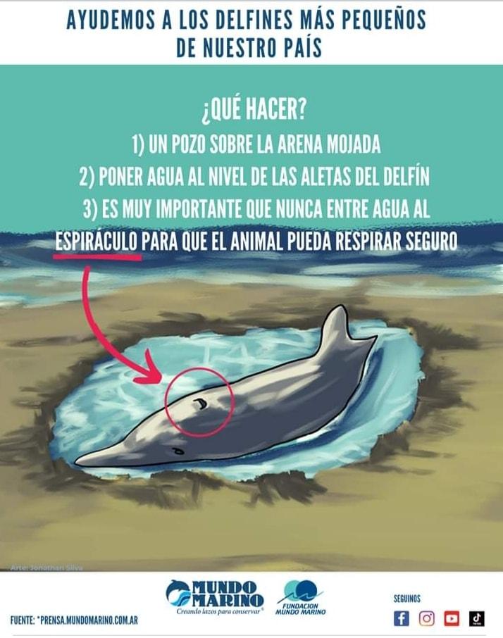 Un delfín en la playa