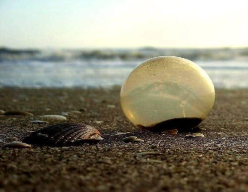 Huevos en la playa de La Costa